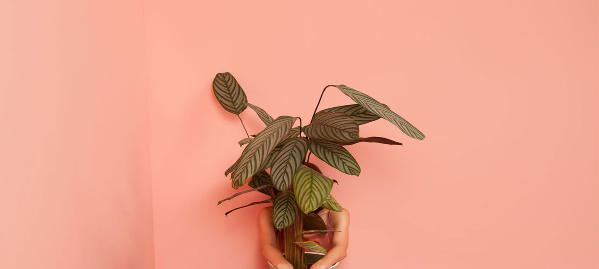 Female model sitting on the floor with a plant pot in pink room